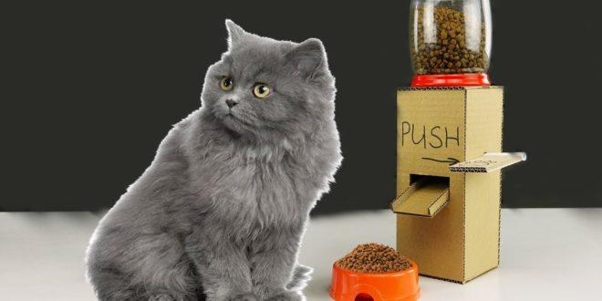 DIY Kitten Cat Food Dispenser from